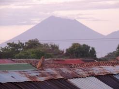 Vulkane dominieren die Landschaft Nicaraguas. Hier posiert ein Vogel vor dem Telica.